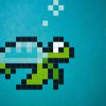 turtle-D-2